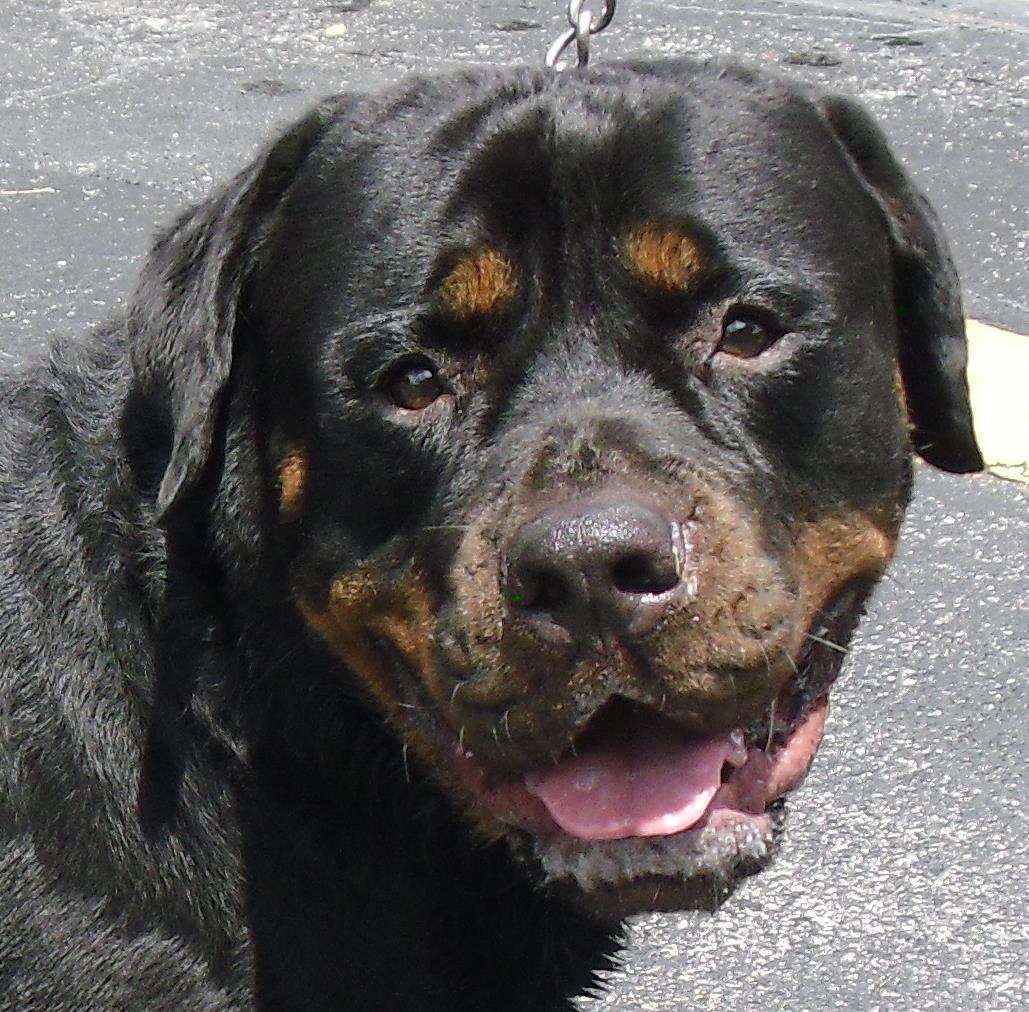 Guardian Angel Dog Rescue Michigan